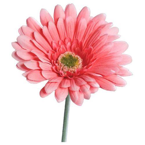 Kunstblume »Gerbera Kunstblumen Blüten 1 Stk 56 cm rosa