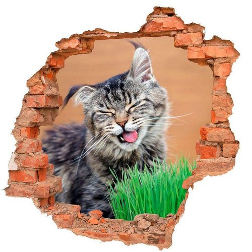 DesFoli Wandtattoo »Katze Katzengras Tier Natur B0426«, bunt