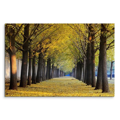 Sinus Art Leinwandbild »120x80cm Wandbild Ginkgobäume Allee Herbst«