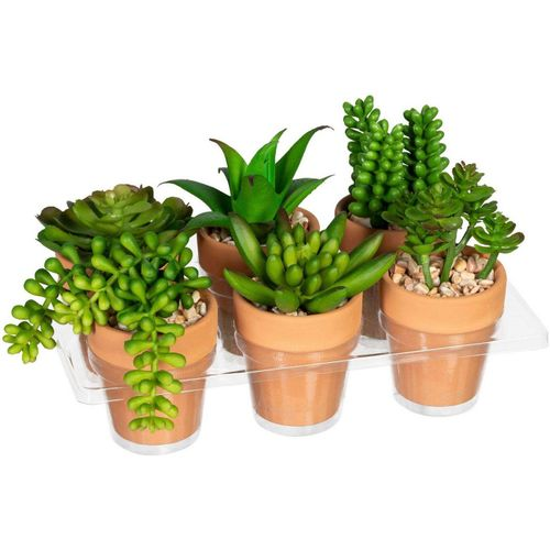 Künstliche Zimmerpflanze »Mini-Sukkulenten« Sukkulente, Creativ green, Höhe 9 cm, im Tontopf, 6er Set, grün