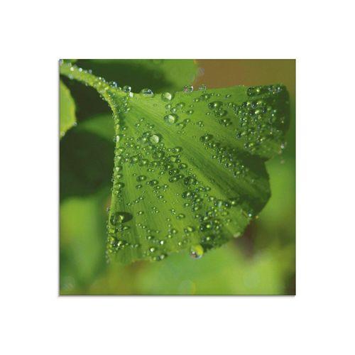Artland Glasbild »Ginkgo«, Blätter (1 Stück), grün