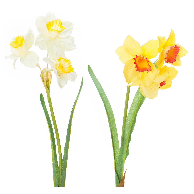 Narzissen, gelb-weiß, 35 cm, 2 Stück