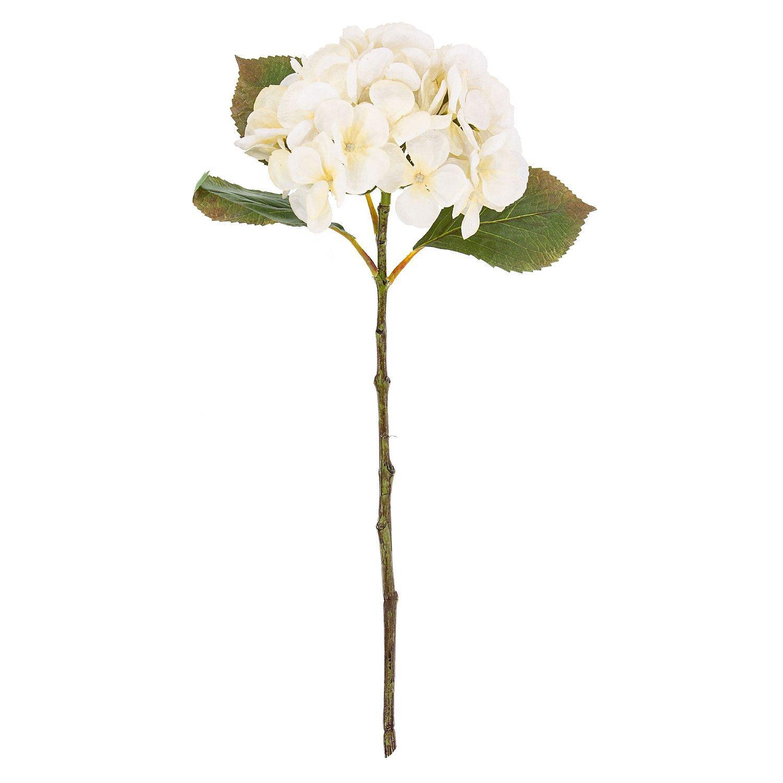 Hortensie, creme, 45 cm