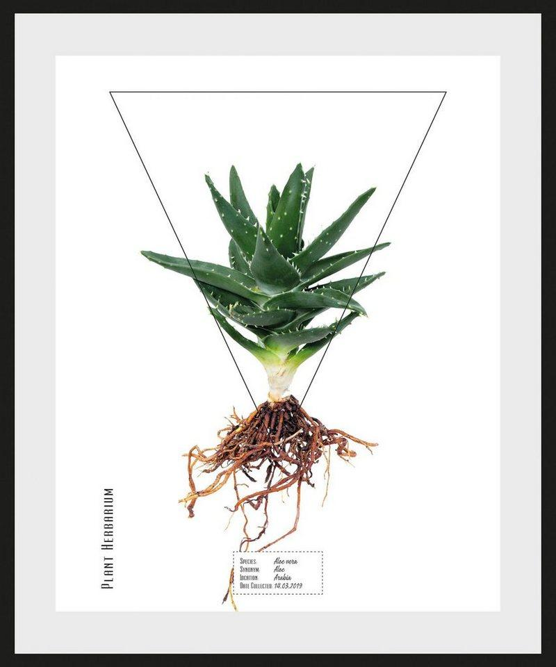 queence Bild »Aloe vera«, (1 Stück)