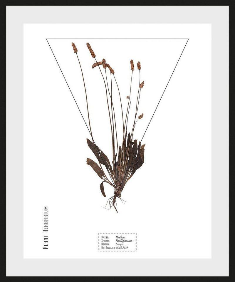 queence Bild »Plantaginaceae«, (1 Stück)