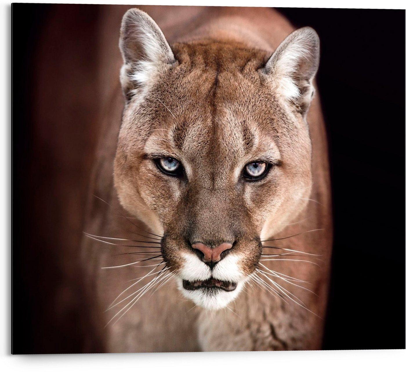 Reinders! Holzbild »Cougar - close-up«, (1 Stück)