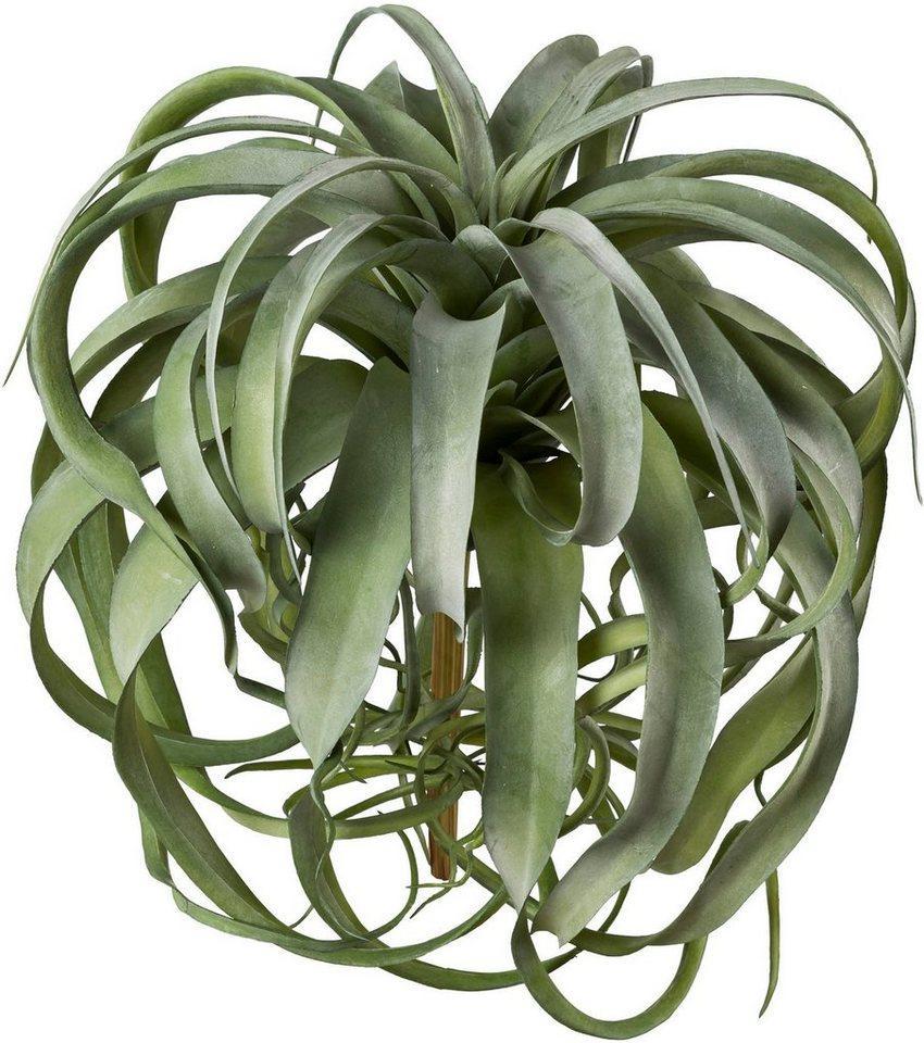 Kunstpflanze »Tillandsie«, Creativ green, Höhe 40 cm