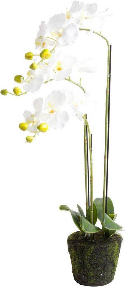 Kunstorchidee »Orchidee« Orchidee, Botanic-Haus, Höhe 75 cm