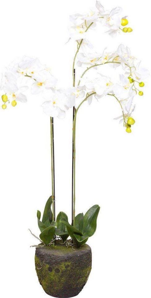 Kunstorchidee »Orchidee« Orchidee, Botanic-Haus, Höhe 110 cm
