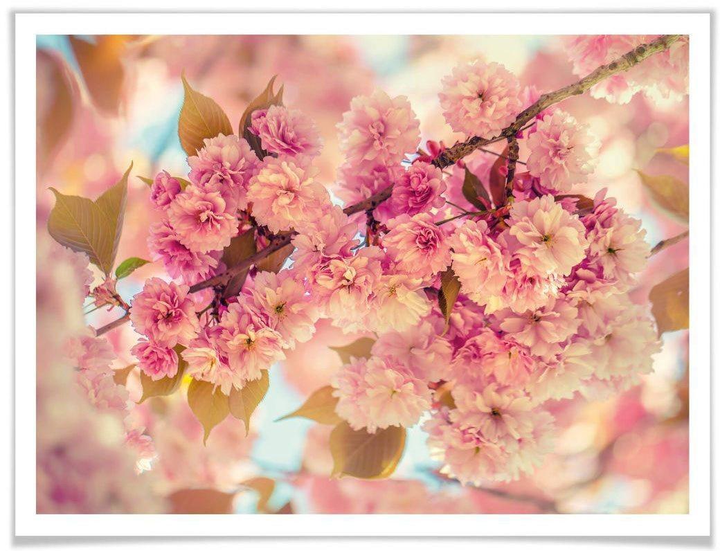Wall-Art Poster »Kirschblüten«, Natur (1 Stück)