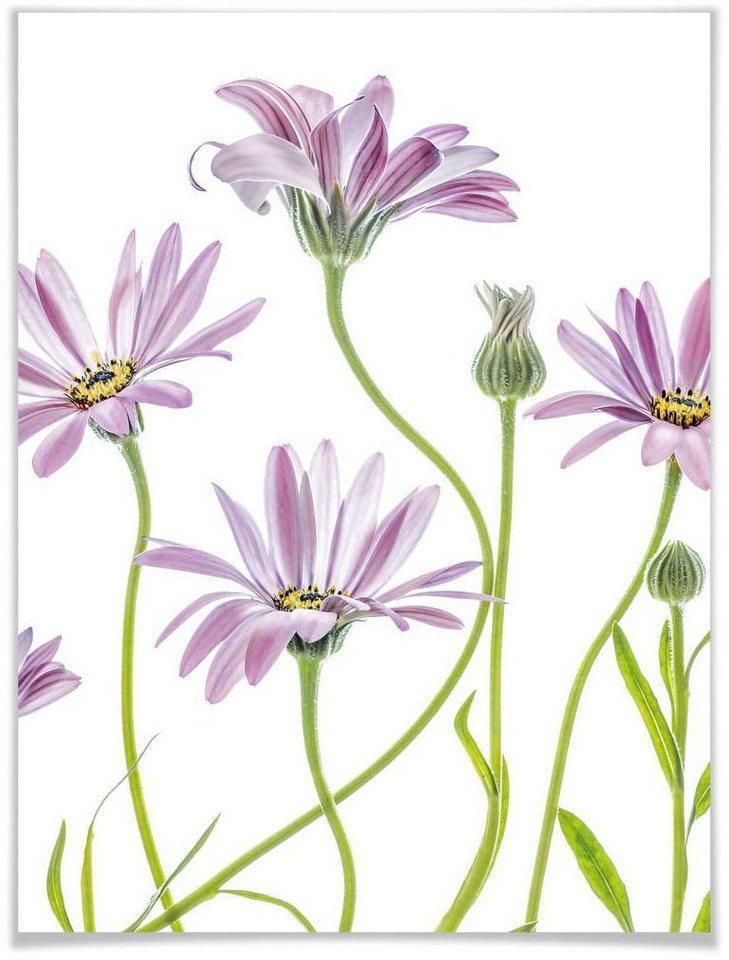 Wall-Art Poster »Gänseblümchen«, Blumen (1 Stück)
