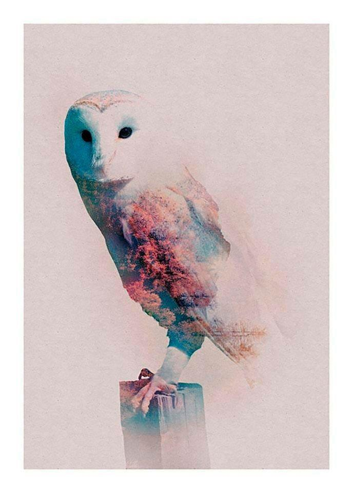 Komar Poster »Animals Forest Owl«, Tiere, Höhe: 50cm