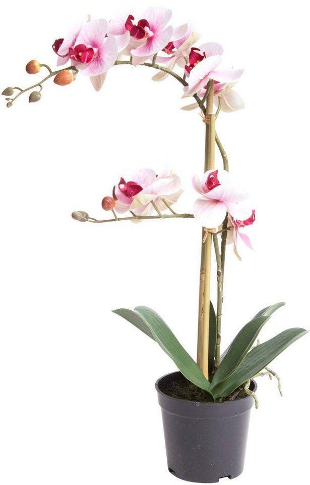 Kunstorchidee »Orchidee Bora« Orchidee, Botanic-Haus, Höhe 50 cm