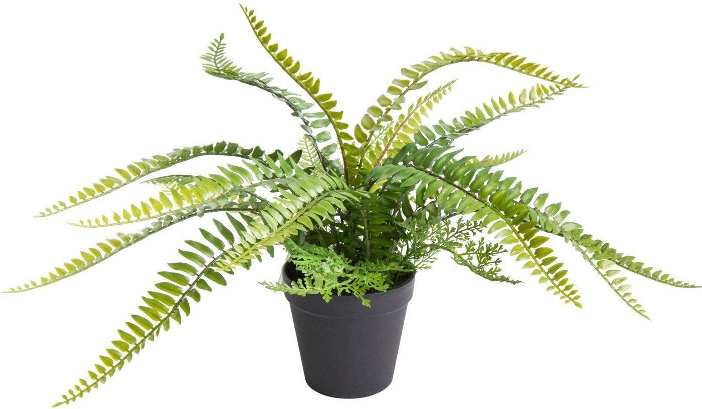 Künstliche Zimmerpflanze »Farn mit 18 Blättern« Farn, Botanic-Haus, Höhe 28 cm