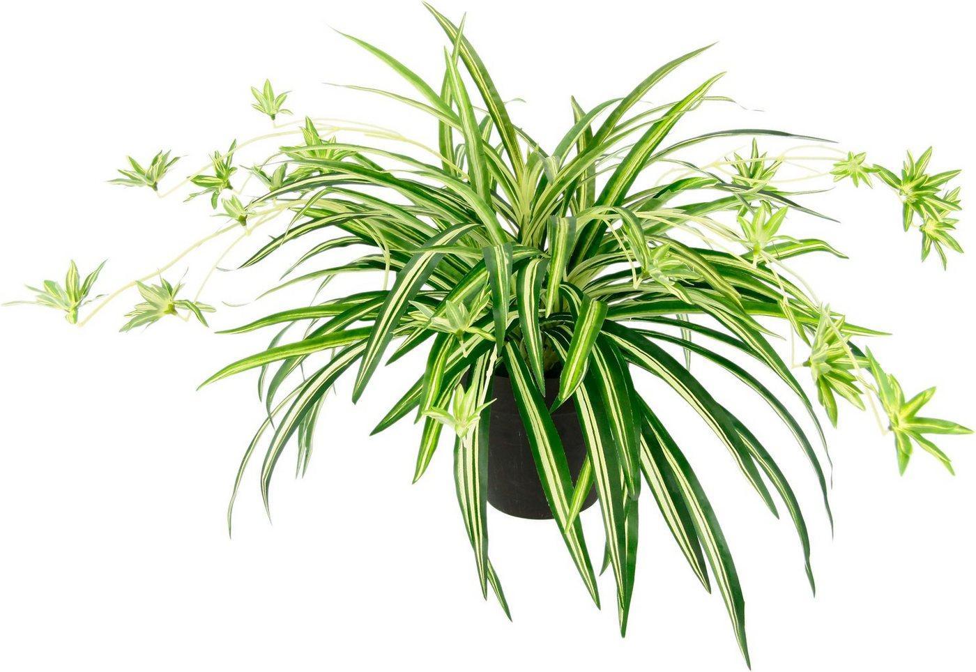 Kunstpflanze »Wasserlilie«, I.GE.A., Höhe 40 cm, Im Topf