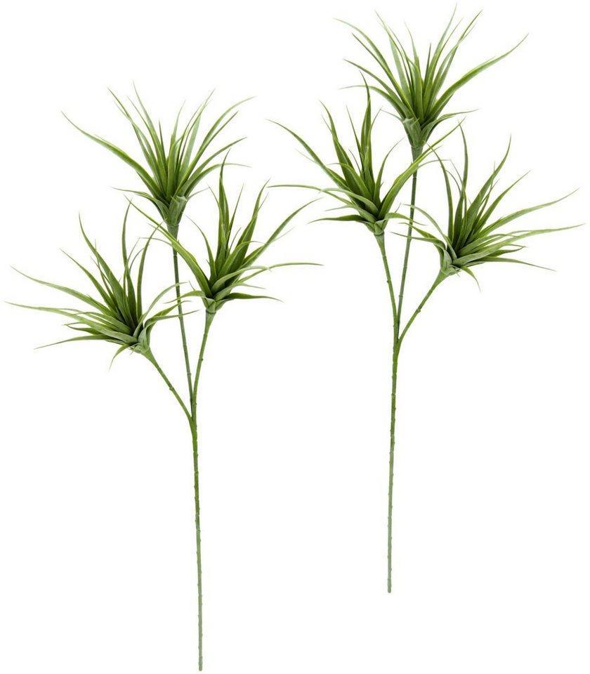 Kunstpflanze »Tillandsia«, I.GE.A., Höhe 63 cm, 2er Set, grün