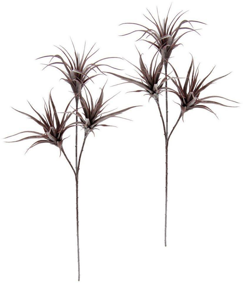 Kunstpflanze »Tillandsia«, I.GE.A., Höhe 63 cm, 2er Set, rosa
